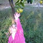 agriturismo zio cristoforo agrumi