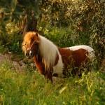 agriturismo zio cristoforo cavallo