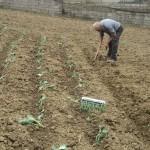 agriturismo zio cristoforo piantare
