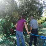 agriturismo zio cristoforo raccolta olive