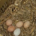 agriturismo zio cristoforo uova